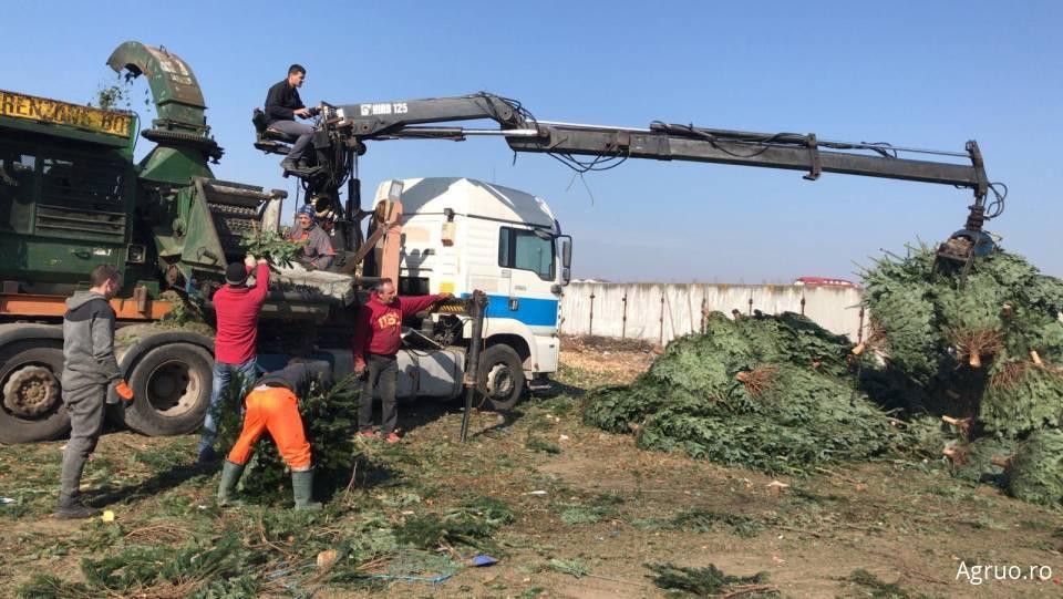 Tocator pentru arbusti si copaci42401